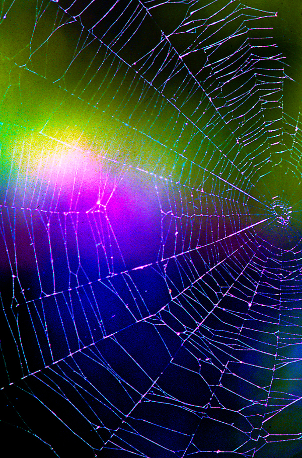 spider-web-enhanced-web.jpg